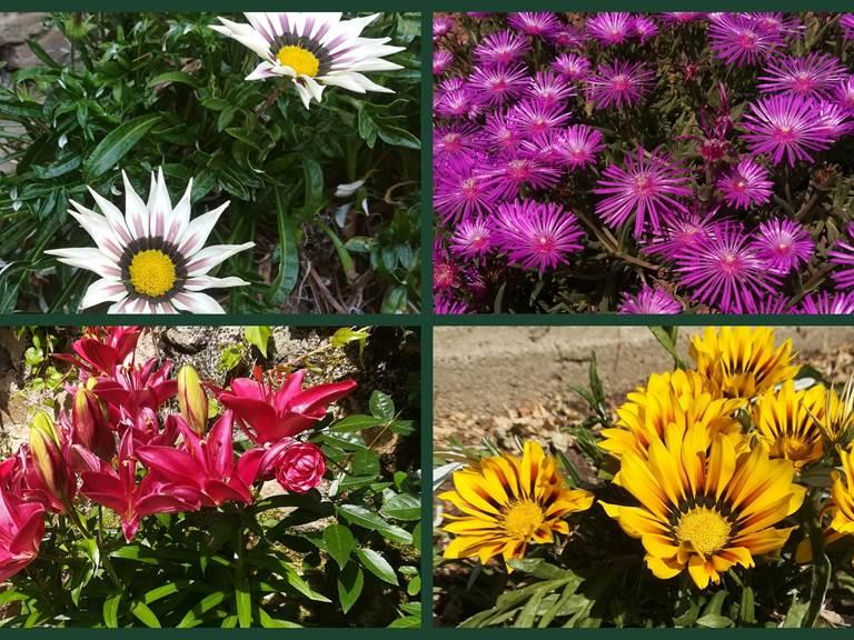 explosion de couleurs au jardin !
