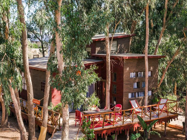 riad Baoussala Essaouira - Suite Taabiha - cabane dans les arbres - trees house
