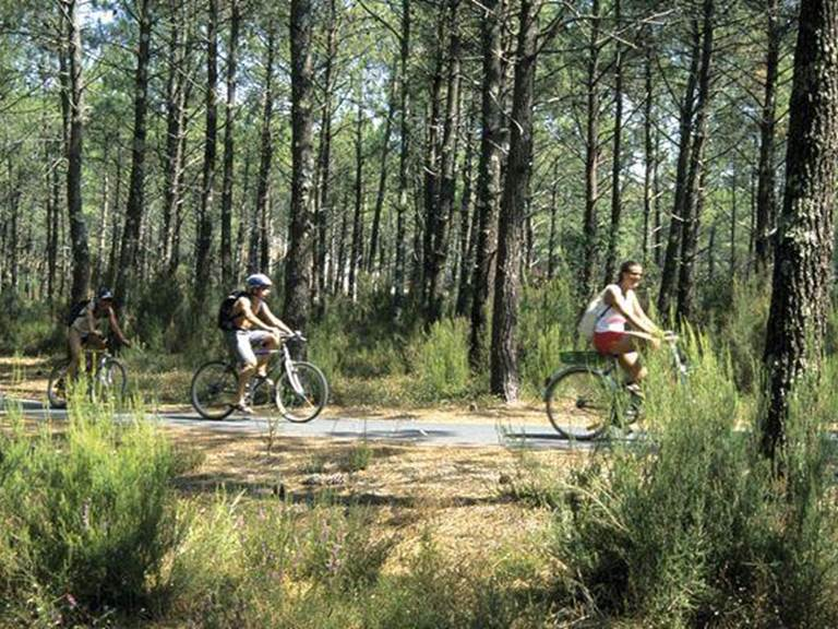foret-landes-camping-le-boudigau