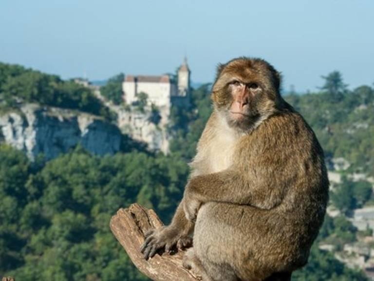 la-foret-des-singes