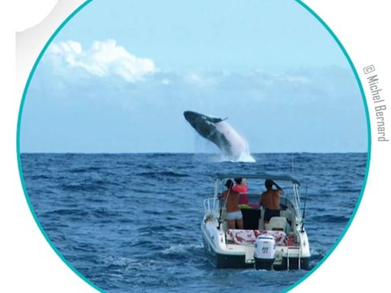 baleines qui saute