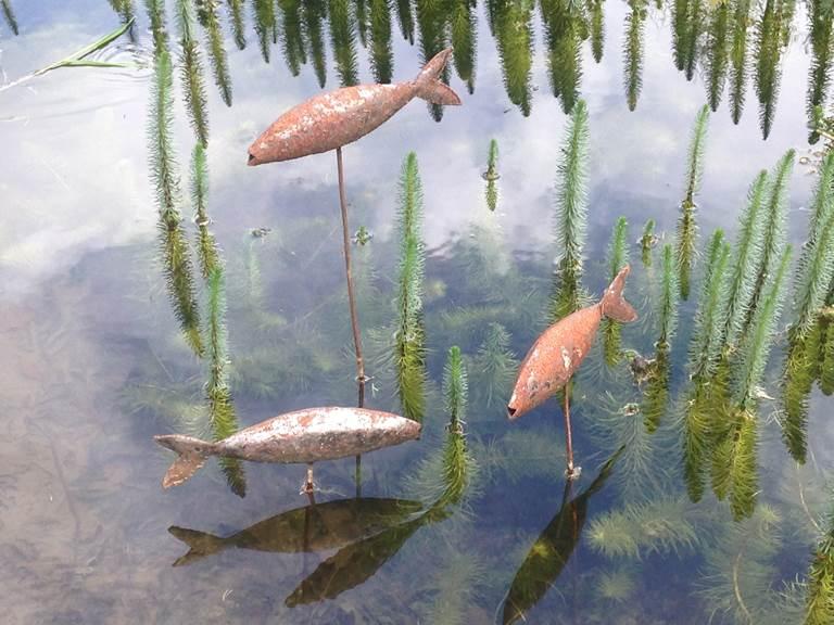 Les poissons dans le jardin de Gilles Clément