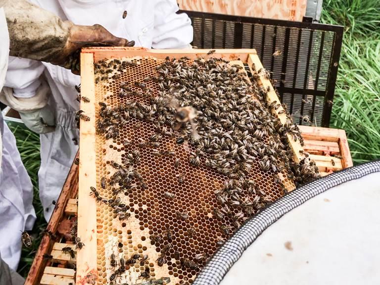 les-ruches-d-armalia