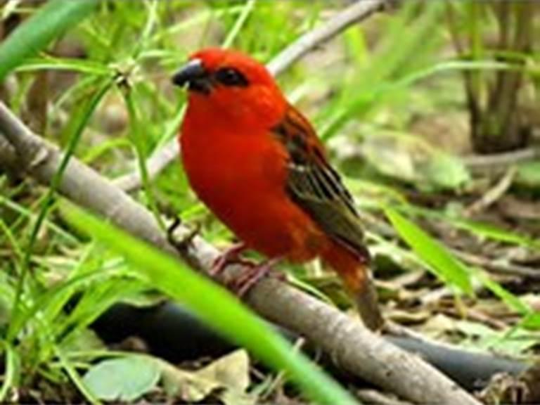 cardinal+j+eden