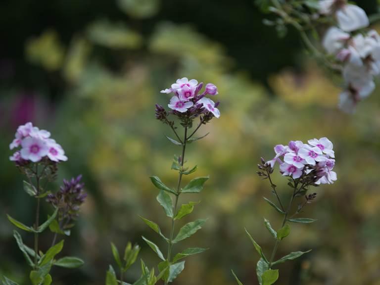 fleur jardin_web
