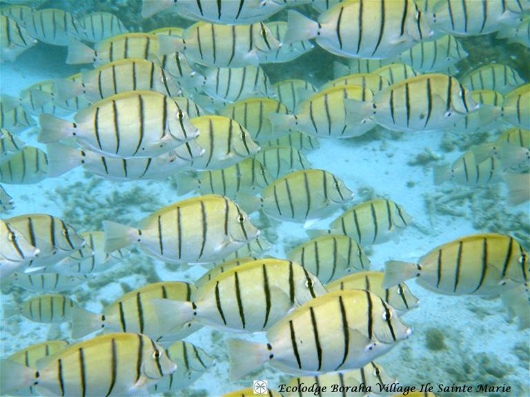 Faune Marine Boraha VIllage Ile Ste Marie Madagascar 02