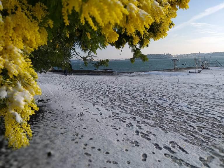 Clos de la Fontaine Dinard, les mimosas du Prieuré