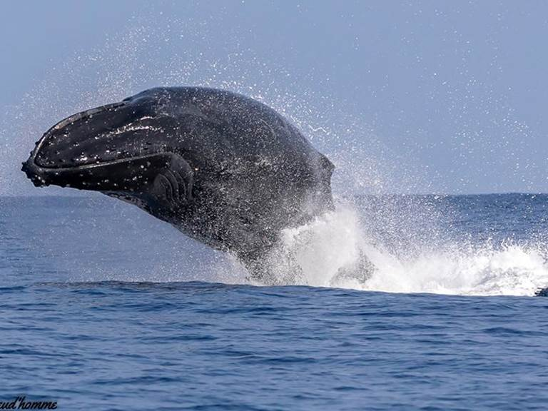 baleine st gilles by isabelle p et cocoboat