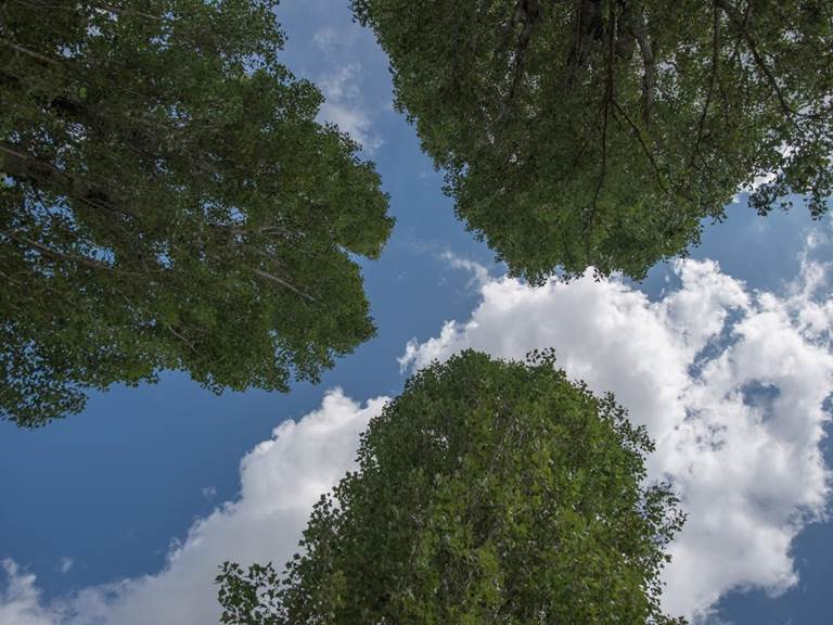 vue aerienne du hamac