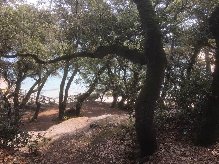 Bois de la Chaise - Île de Noirmoutier