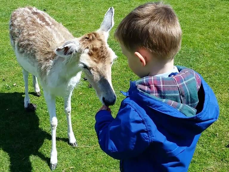 Enfant nourrissant un daim au parc du Quinquis