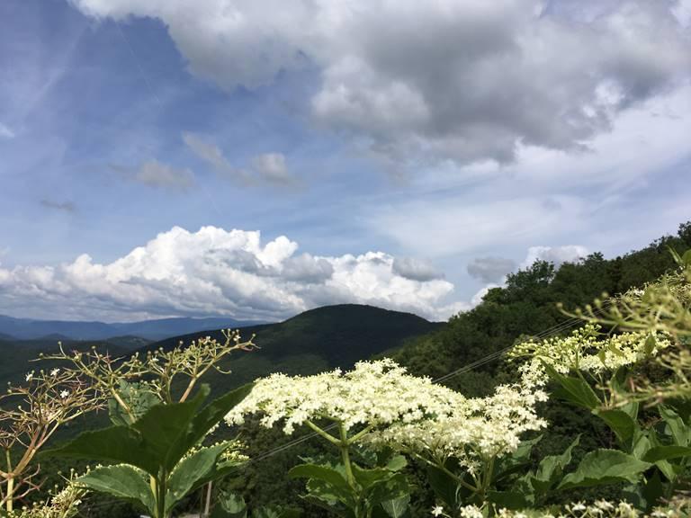 balade d'herboriste à Saint-Roman de Codières (gratuite) ABC