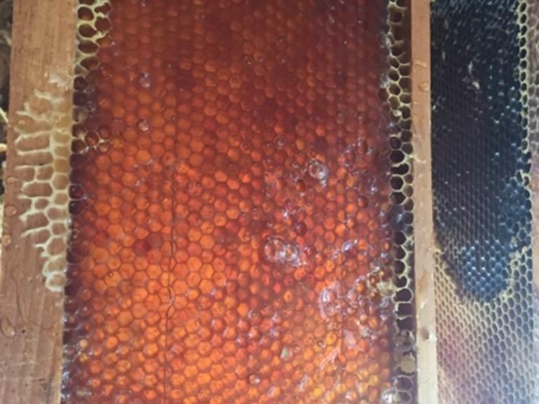 Cadre de hausse rempli de miel avant extraction