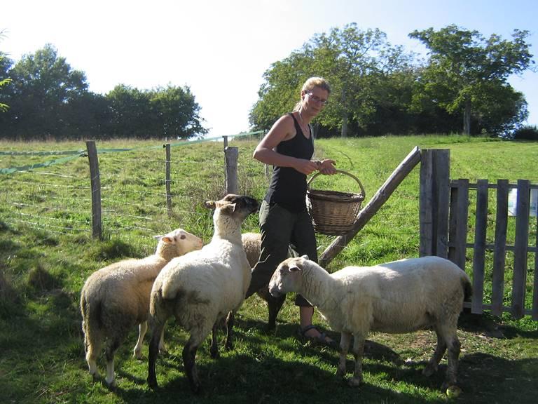 schapen madelinde