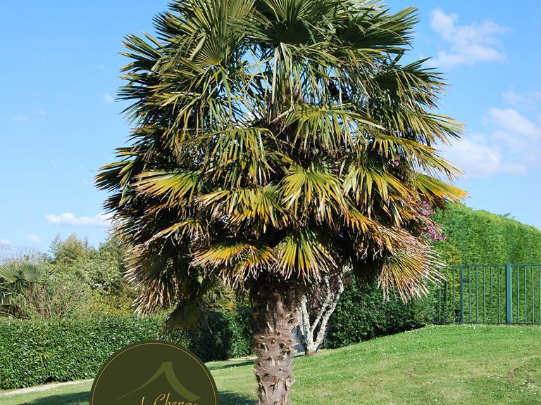 Palmier ensoleillé