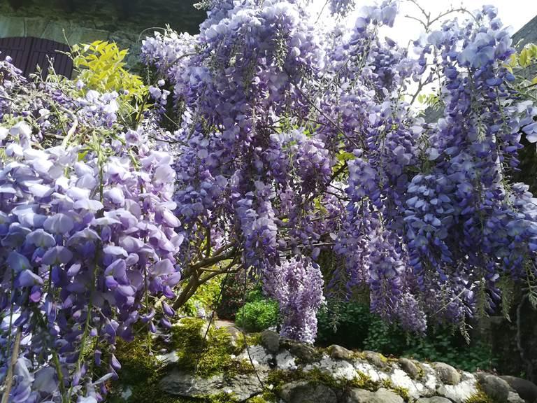 sejourprintemps-jardinfleuri-parfum-