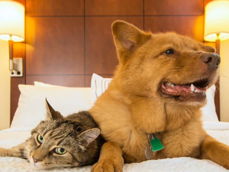 hotel-animaux-chat-chien