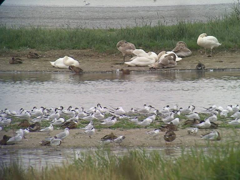 reserve estuaire de seine 2