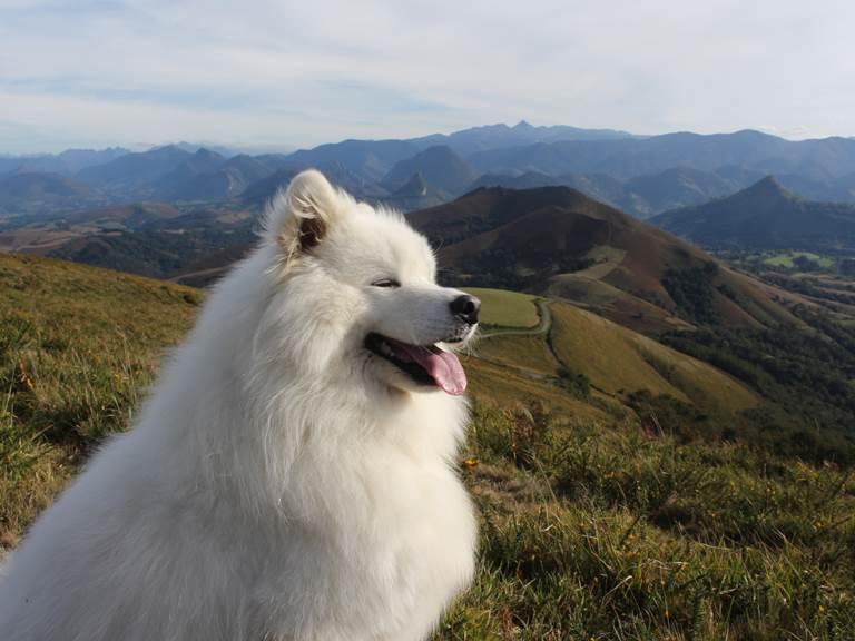 garde de chien, dogsitting