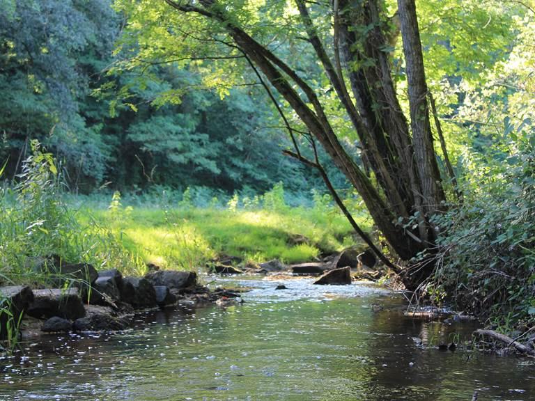 La rivière à l'étoile perchée