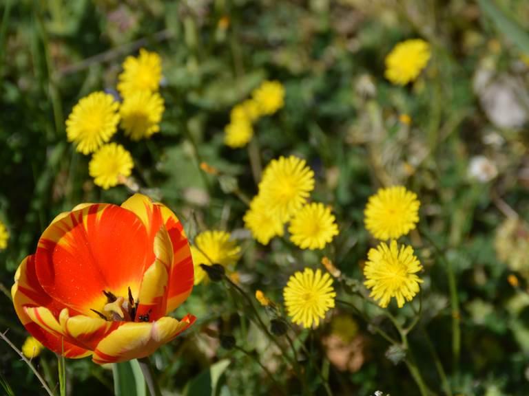 Fleurs à la bastide de Lure