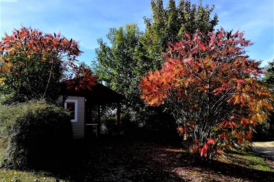 photo automne