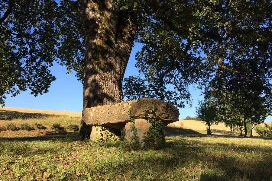 Le grand chêne et le petit banc de pierre invitent le visiteur à trouver la sérénité