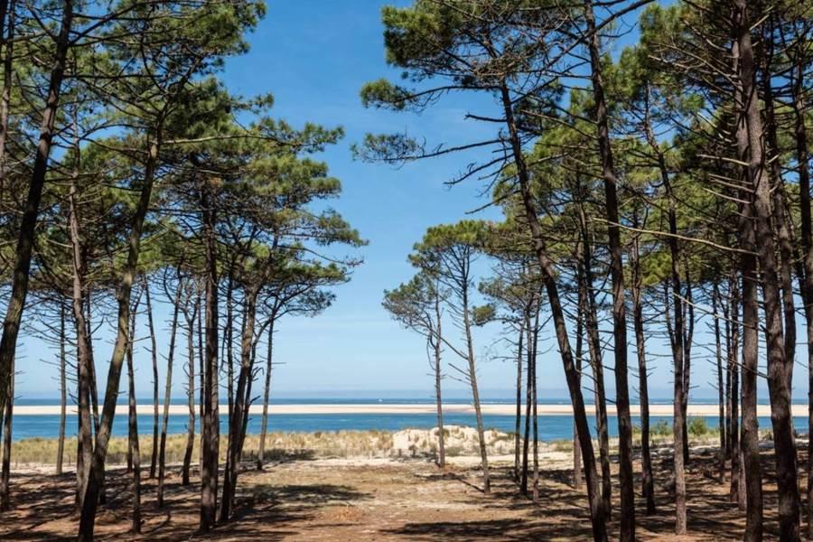 Un littoral de plus de 100 km et La plus vaste forêt de pins d'Europe