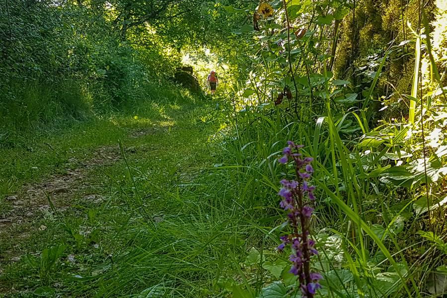 Orchidéessauvages © Lot Tourisme - A