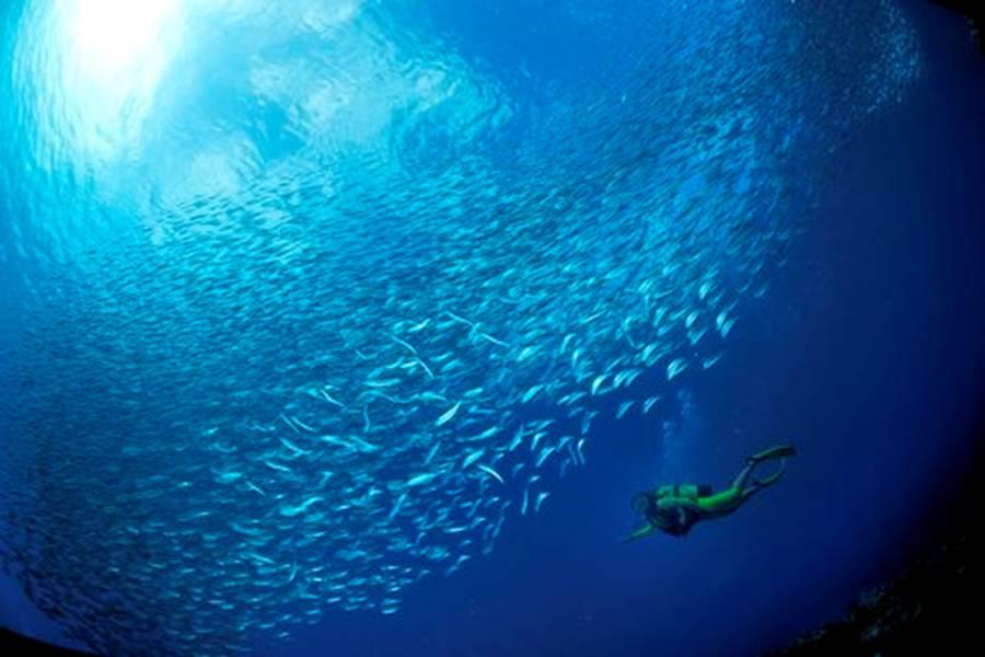 plongee_fonds_marins18_banc_de_sardines_-_credit_irt_-_laurent_beche_dts_12_2014