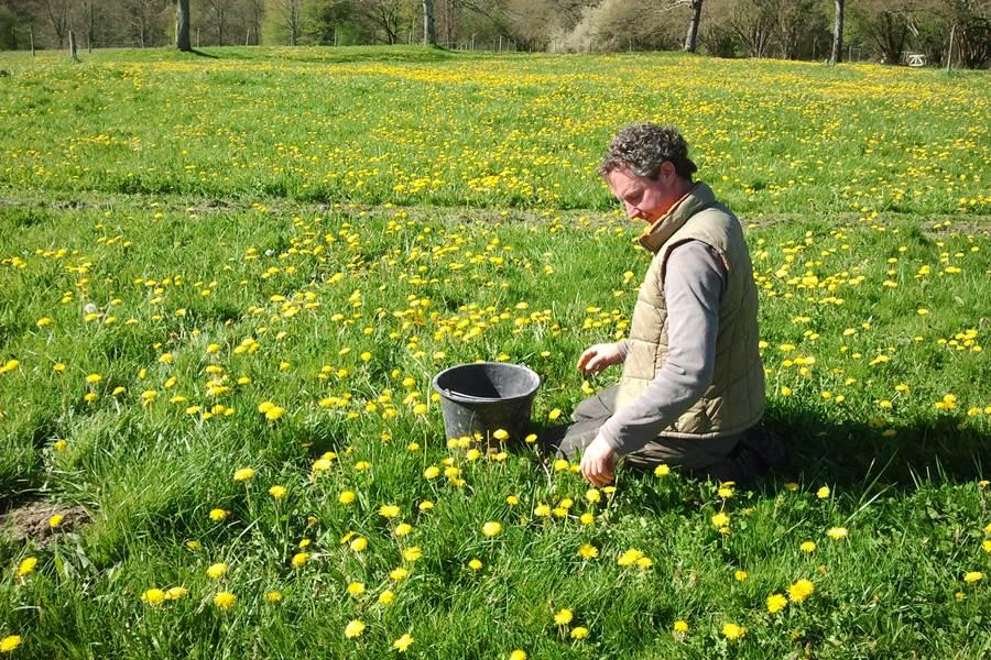 bloemetjes plukken