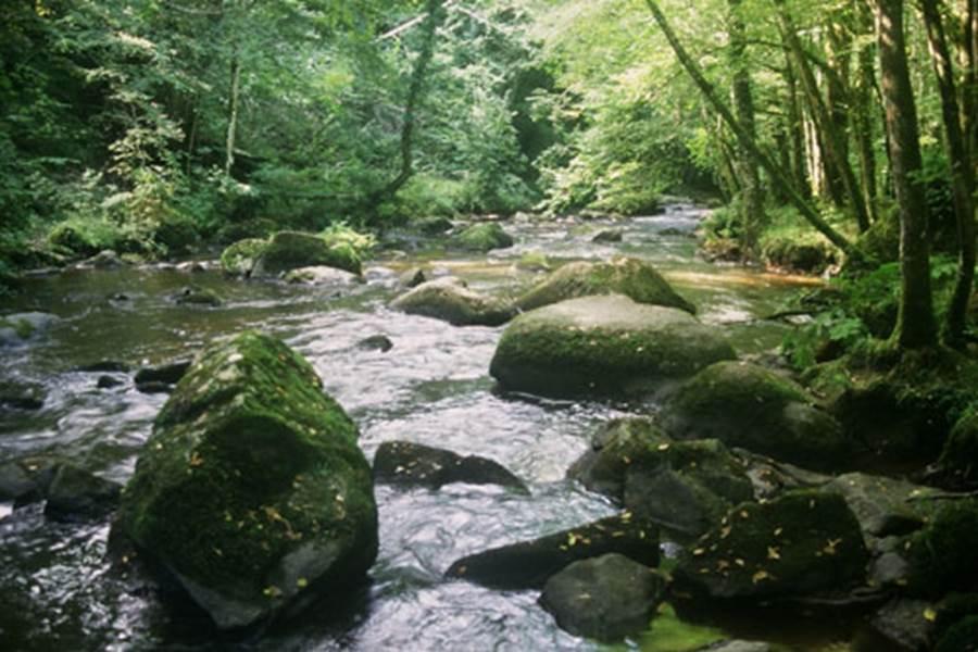 la ruisseau la Jaurie