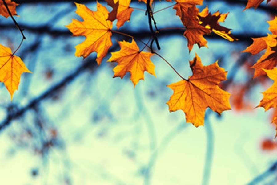 Magnifique saison l'automne