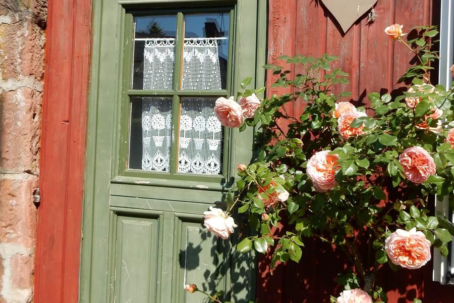 Entrée de Cassiopée à la saison des roses