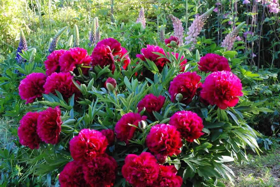 Un beau bouquet de printemps pour vous accueillir!