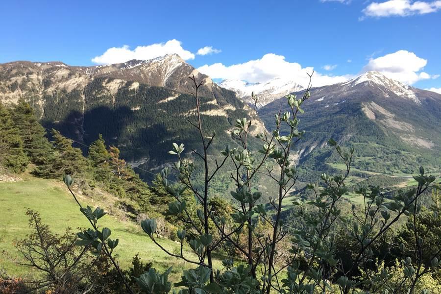 Vue de Serre-Buzard sur le Pic du Clocher et le Mont Orel