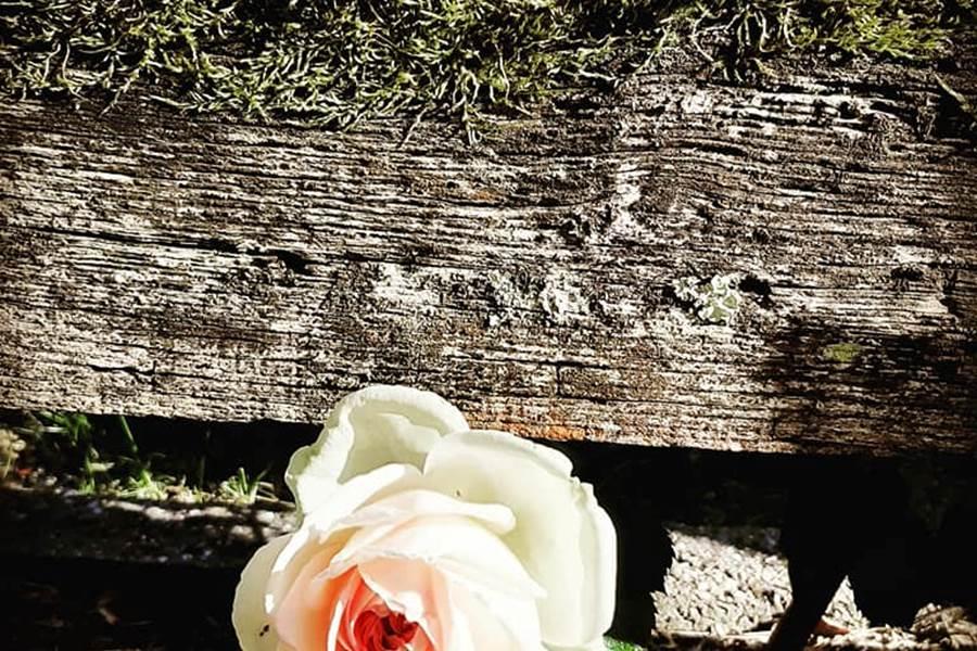 Rose Merlot