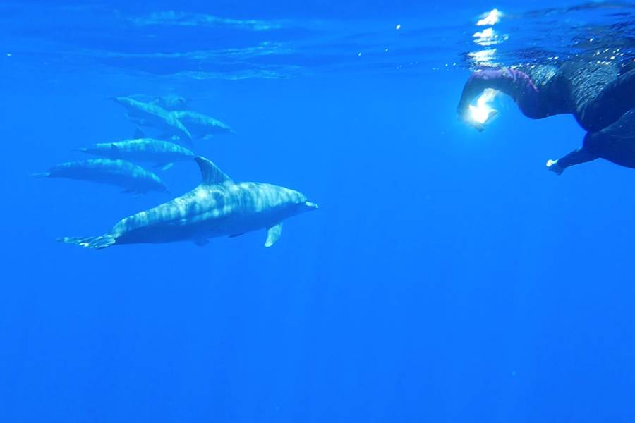 nages avec les cetacés