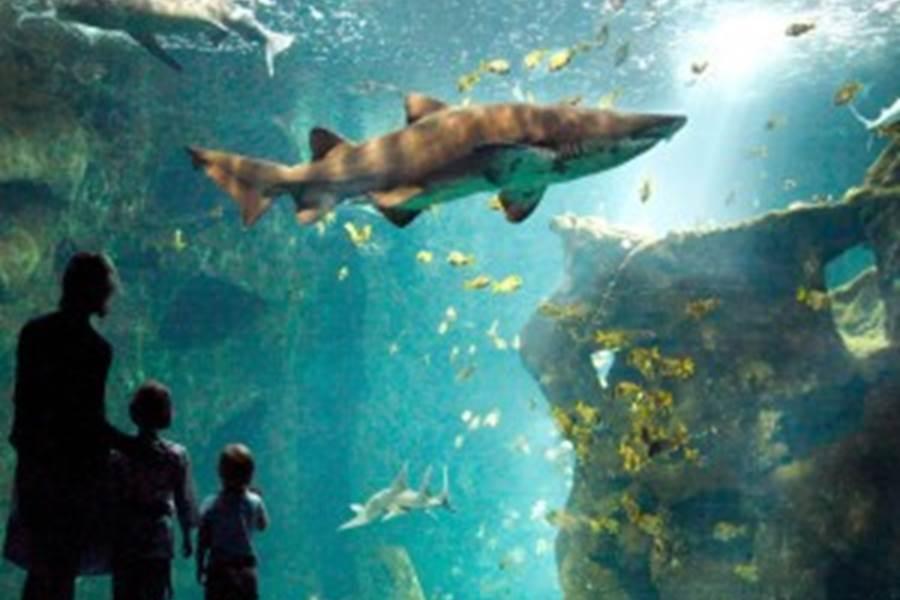 AquariumLaRochelle-300x300