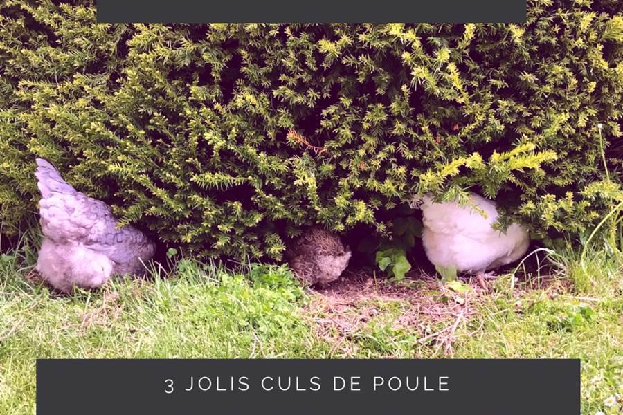 Les Poules de LES LODGES DU CHATEAU