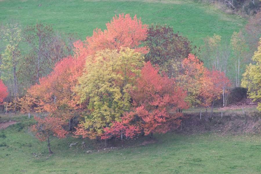 Merisiers sauvages à l'automne