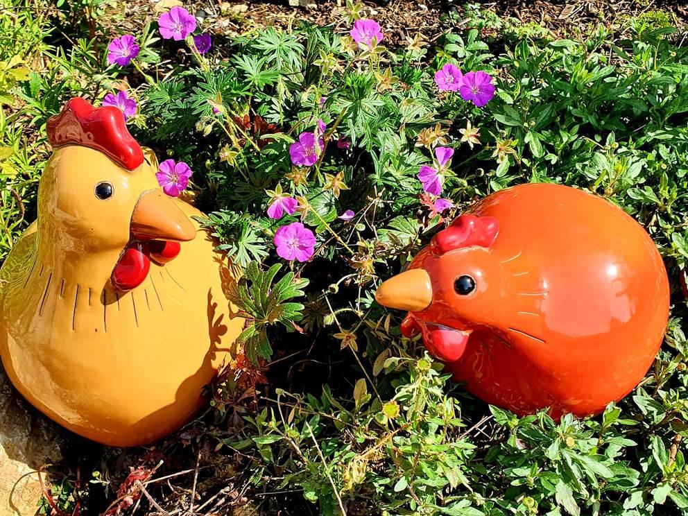 Les poulettes du gîte Le Cantalou