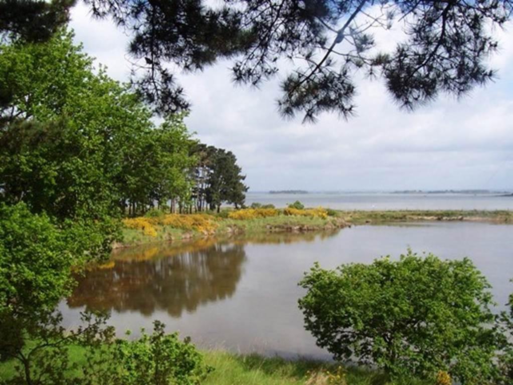Marais du Duer Sarzeau Morbihan Bretagne Sud