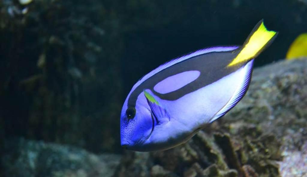 Aquarium-Vannes-Golfe-du-morbihan