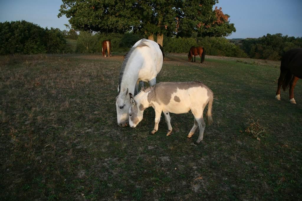 La colline aux chevaux