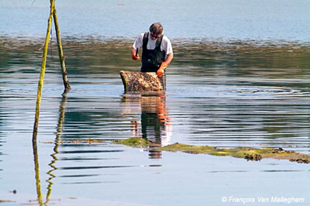 Morbihan-Bretagne-Sud-Exploitations-ostréicoles-le-tour-du-parc